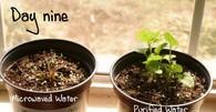 Microwavedwaterdeadplant_2